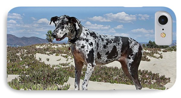 A Great Dane Standing In Sand IPhone Case