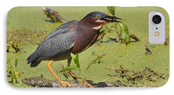 IPhone Case featuring the photograph A Greenbacked Heron's Breakfast by Kathy Baccari