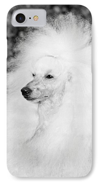 A Groomed Standard Poodle IPhone Case by Underwood Archives
