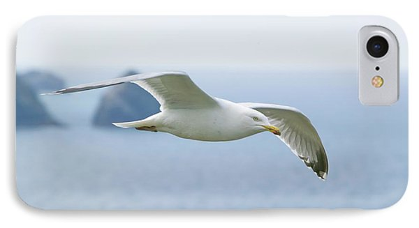 A Herring Gull IPhone Case by Ashley Cooper