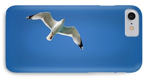 A Herring Gull In Flight IPhone Case by Ashley Cooper
