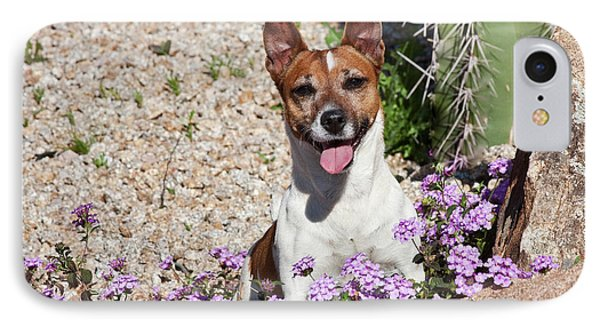 A Jack Russell Terrier Sitting IPhone Case by Zandria Muench Beraldo