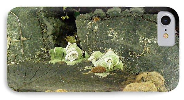 A Lichen Family  IPhone Case by Nancy Kane Chapman