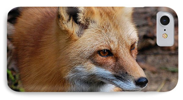 IPhone Case featuring the photograph A Little Red Fox by Kathy Baccari