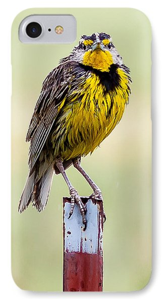A Little Wet IPhone Case by Brian Williamson