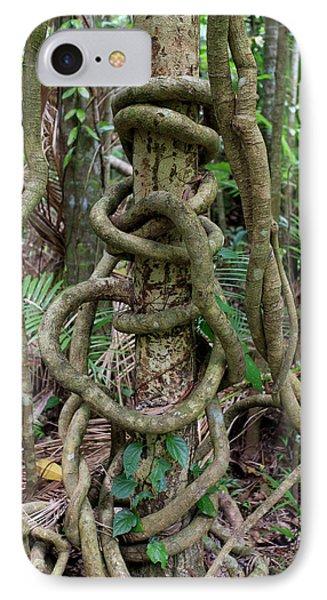 Far North Queensland iPhone 7 Case - A Long Vine Wraps Itself by Paul Dymond