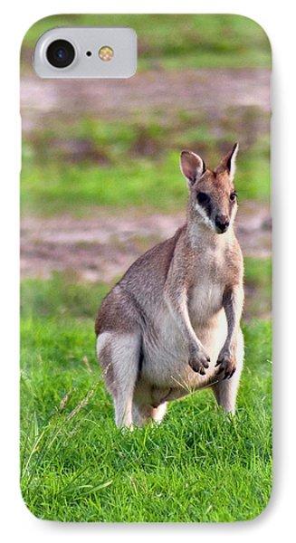 A Male Grey Kangaroos (macropus IPhone 7 Case by Miva Stock