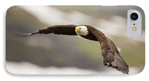 A Mature Bald Eagle In Flight IPhone Case by Tim Grams