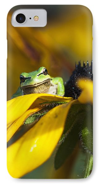 A Pacific Treefrog Looks For Flies IPhone Case by Robert L. Potts