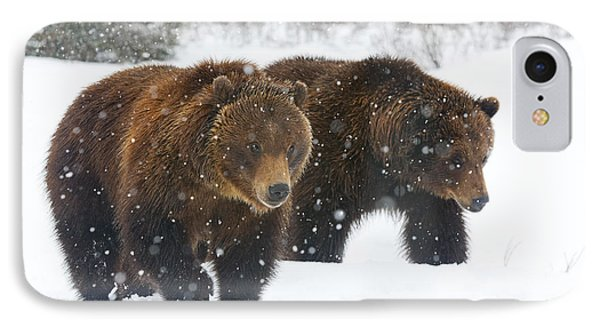 A Pair Of Adult Brown Bears Walk IPhone Case by Doug Lindstrand