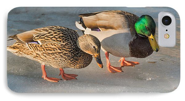 A Pair Of Mallards On Frozen Lake IPhone Case by Gerda Grice
