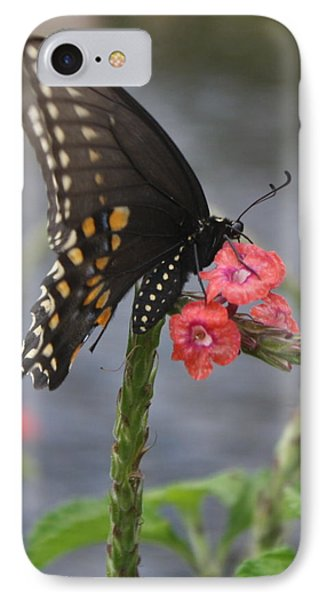 A Pause In Flight IPhone Case by Judith Morris