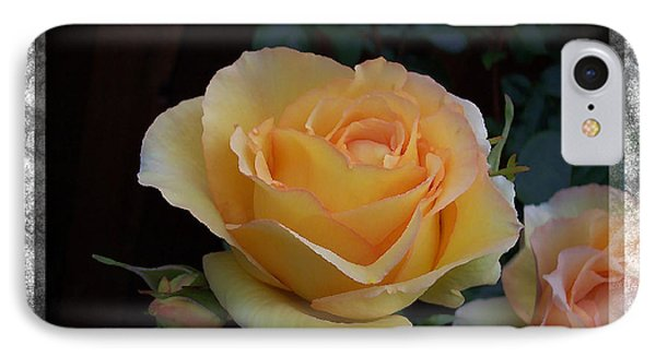 A Peach Of A Rose IPhone Case by Barbara R MacPhail