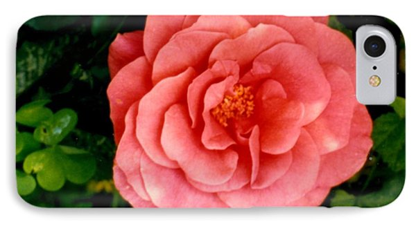 IPhone Case featuring the photograph A Pink Rose by Mary Armstrong