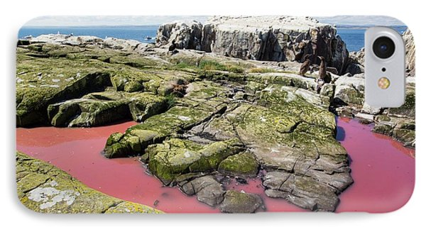 A Pool Coloured Red From Algae IPhone Case by Ashley Cooper