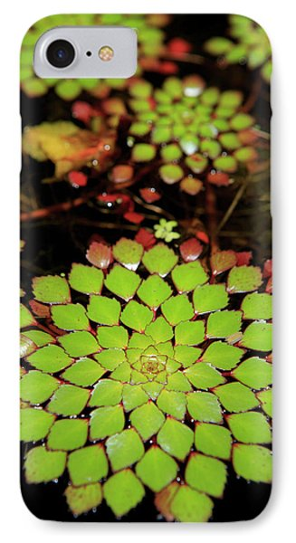 Far North Queensland iPhone 7 Case - A Pot Plant Display In The Cairns by Paul Dymond