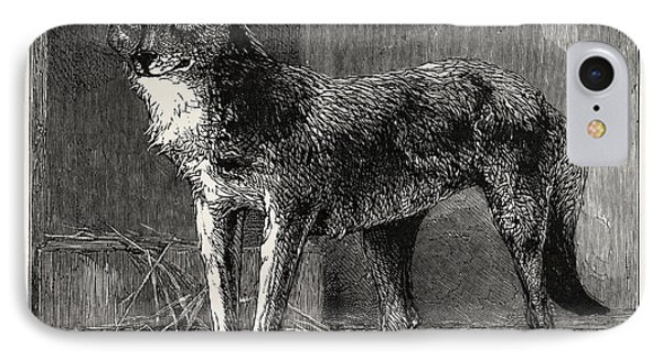 A Prairie Wolf, Caught In Epping Forest Now Being Exhibited IPhone Case by English School