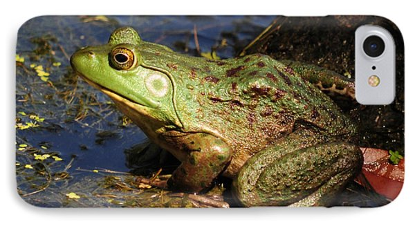 IPhone Case featuring the photograph A Prince Of A Frog by Kathy Baccari