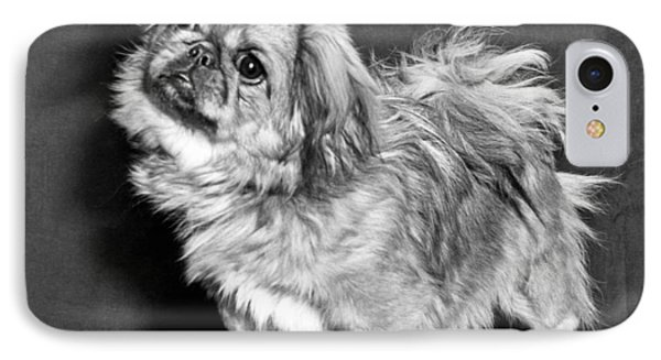 A Quizzical Pekingese IPhone Case by Underwood Archives