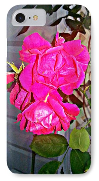 A Rose From The Garden Of Love IPhone Case