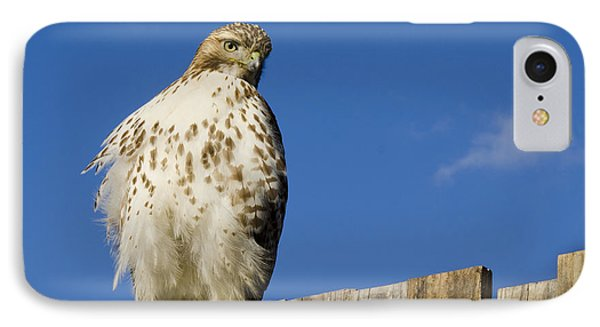 A Rough Legged Hawk On The Hunt IPhone Case by MaryJane Armstrong