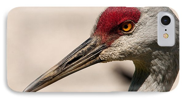 A Sandhill Crane Portrait IPhone Case by Sabine Edrissi