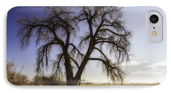 A Simple Tree IPhone Case by Kristal Kraft