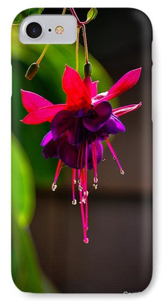 A Special Red Flower  IPhone Case by Gandz Photography