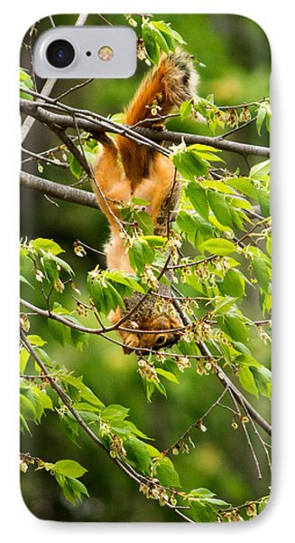 A Squirrely Day IPhone Case