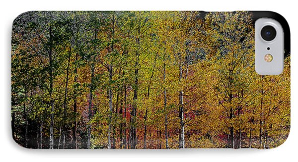 A Stand Of Birch Trees In Autumn IPhone Case by David Patterson