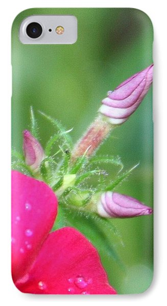 A Star Is Born IPhone Case by Debra Kaye McKrill
