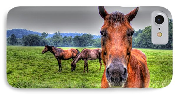A Starring Horse IPhone Case by Jonny D
