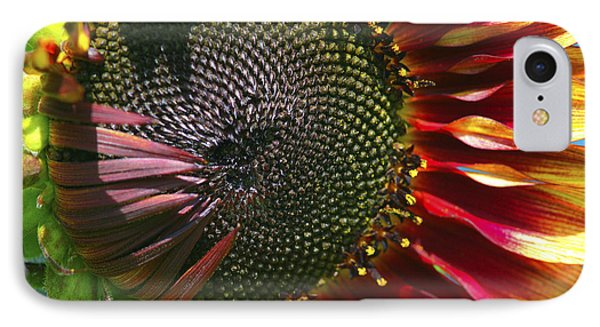 A Sunflower For The Birds Phone Case by Sharon Talson