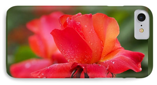 A Tintinara Rose In The Rain IPhone Case by Rona Black