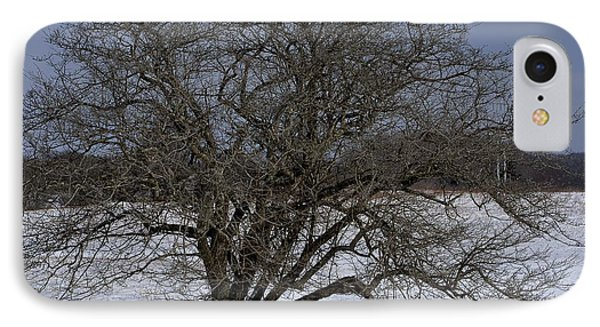 A Tree In Canaan 2 IPhone Case by Randy Bodkins
