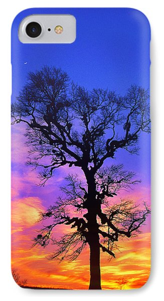 A Tree Is An Object Of Beauty Xiv IPhone Case