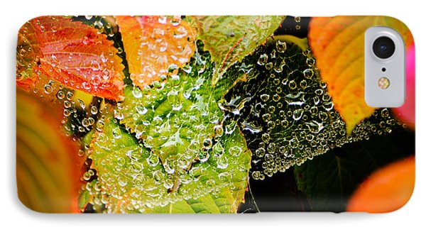 IPhone Case featuring the photograph A Web Of Rain by Ronda Broatch
