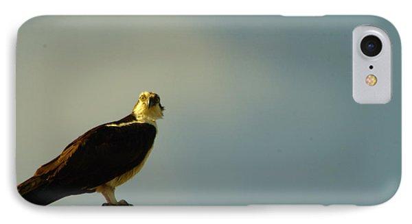 A Wide Eyed Osprey Phone Case by Jeff Swan