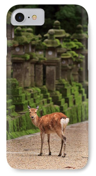A Wild Deer Stands Next To A Long Line IPhone Case by Paul Dymond