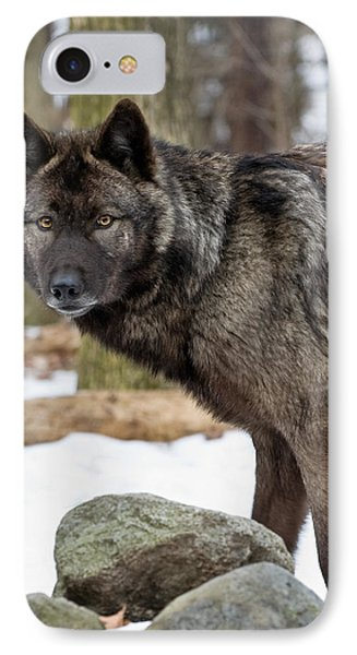 A Wolf's Intense Focus IPhone Case