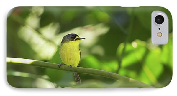 A Yellow-lored Tody Flycatcher IPhone 7 Case