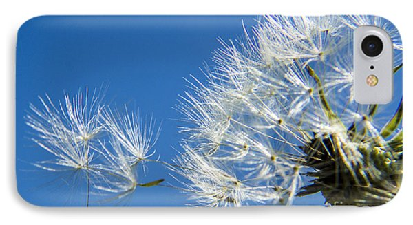 About To Leave - Dandelion Seeds IPhone Case