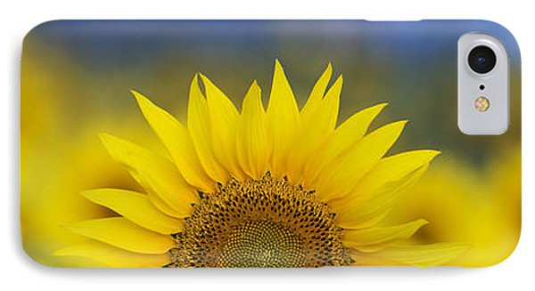 Abstract Sunflower Panoramic  IPhone Case