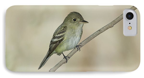 Acadian Flycatcher IPhone Case by Anthony Mercieca
