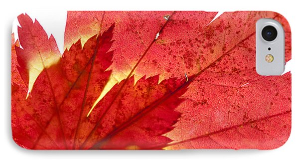 Acer From Beneath Phone Case by Anne Gilbert