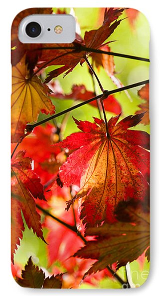 Acer Japonicum O Isami Phone Case by Anne Gilbert