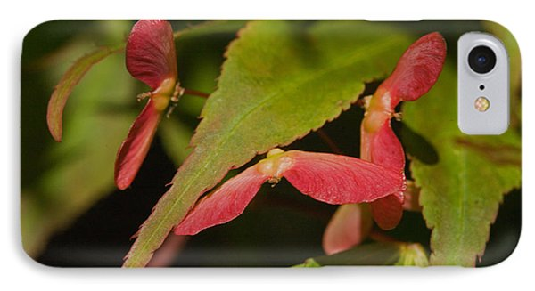 IPhone Case featuring the photograph Acer Wings by Liz  Alderdice