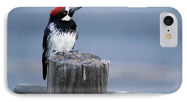 IPhone Case featuring the photograph Acorn Woodpecker by Gary Brandes