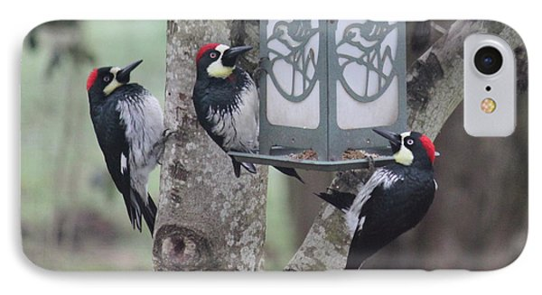 Acorn Woodpeckers IPhone Case by Erica Hanel
