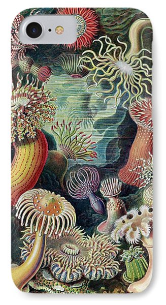 Actiniae Sea Anemones IPhone Case by Library Of Congress